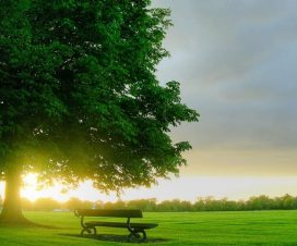 İslam ve Cennet