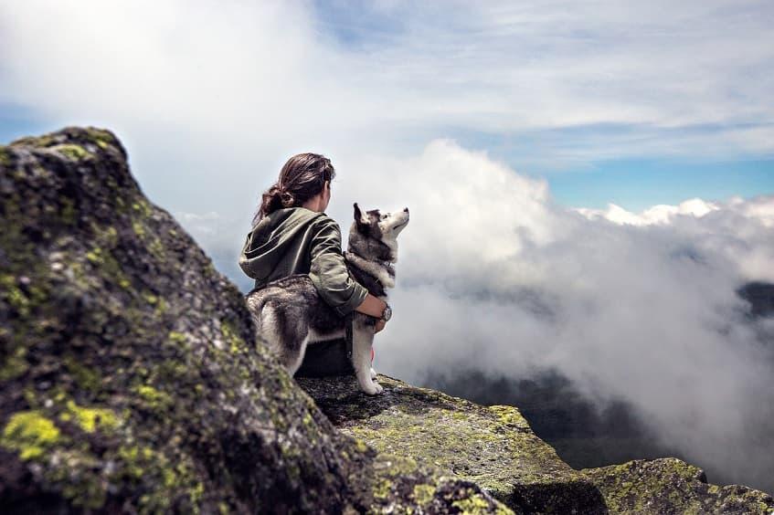 Köpekler ve Hadisler